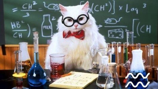 חתלתול מדעי!
