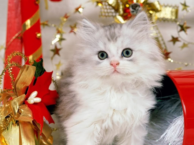 Cats_wallpapers_84