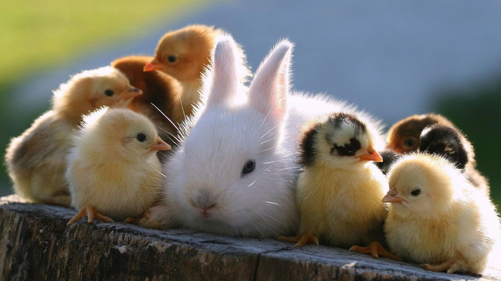 animals_bunny_and_chicks_082250_