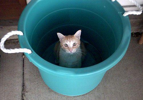 חתלתול עם דלי מים מבקש שתתרמו לעזרה לחולי אבולה