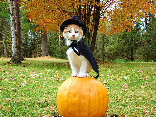 cute-halloween-cats